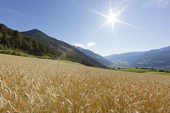 Kirchhof - Allitz - Laas - Urlaub auf dem Bauernhof - Vinschgau