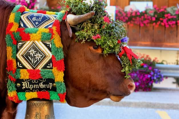 donkey's farm plazores  st vigil  enneberg  urlaub auf