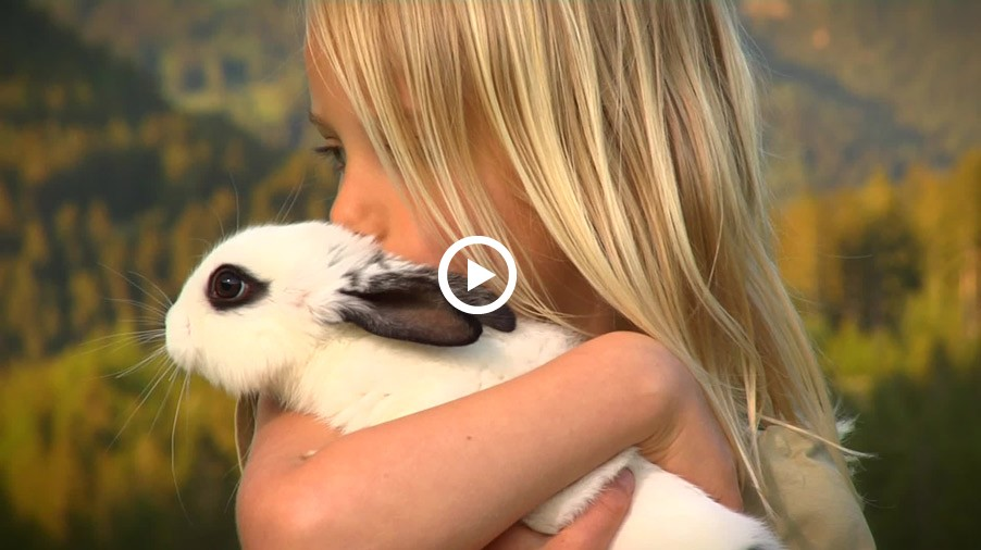 Video: Tierkinder am Bauernhof