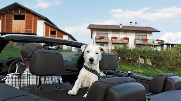 Urlaub Mit Hund In Sudtirol Ihr Hund Macht Auch Urlaub Roter Hahn